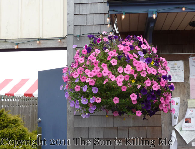 Hanging Flower Baskets Seattle : The sun is ing me drooling over pacific northwest flowers