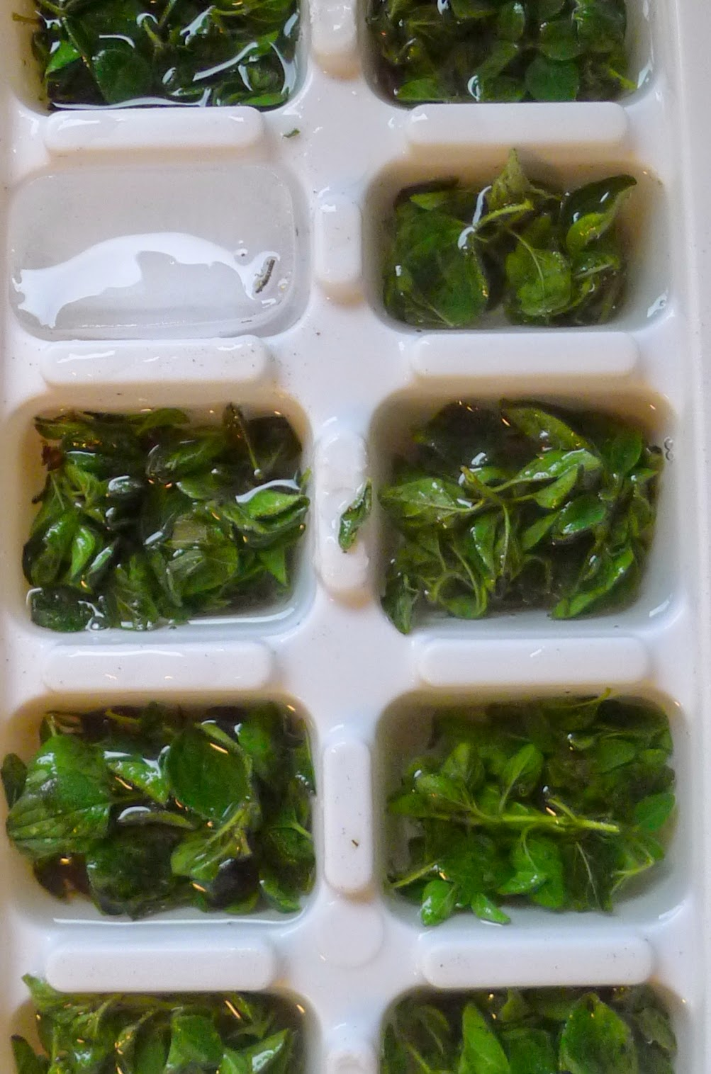 Freezing oregano, preserving herbs