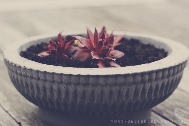 Ynas Design Blog, Betonschale, Concrete