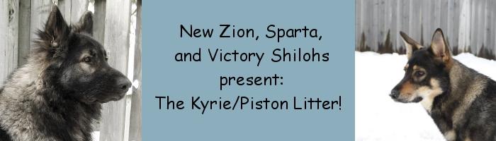 Sparta Shilohs Kyrie/Piston Litter!