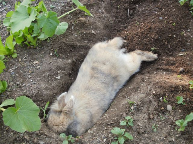 Can Dogs Dig Tunnels