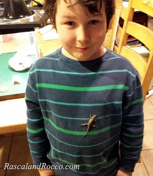 Prepared for a Pet Reptile? #ReptileCare #lizards #pets #lizard