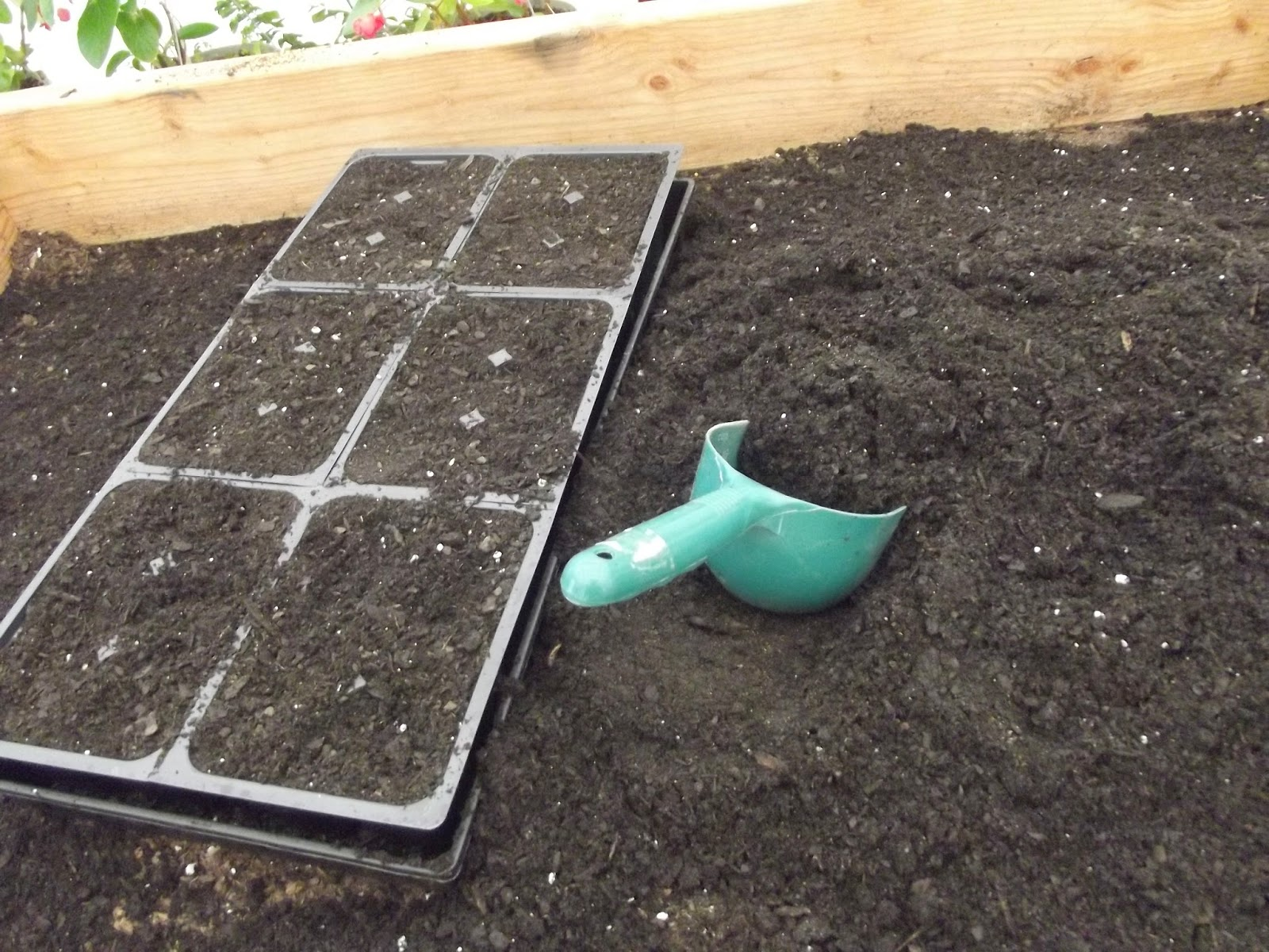 potting soil in seed trays