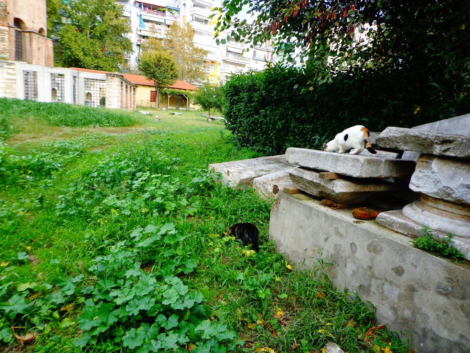 Cats-Saloniki
