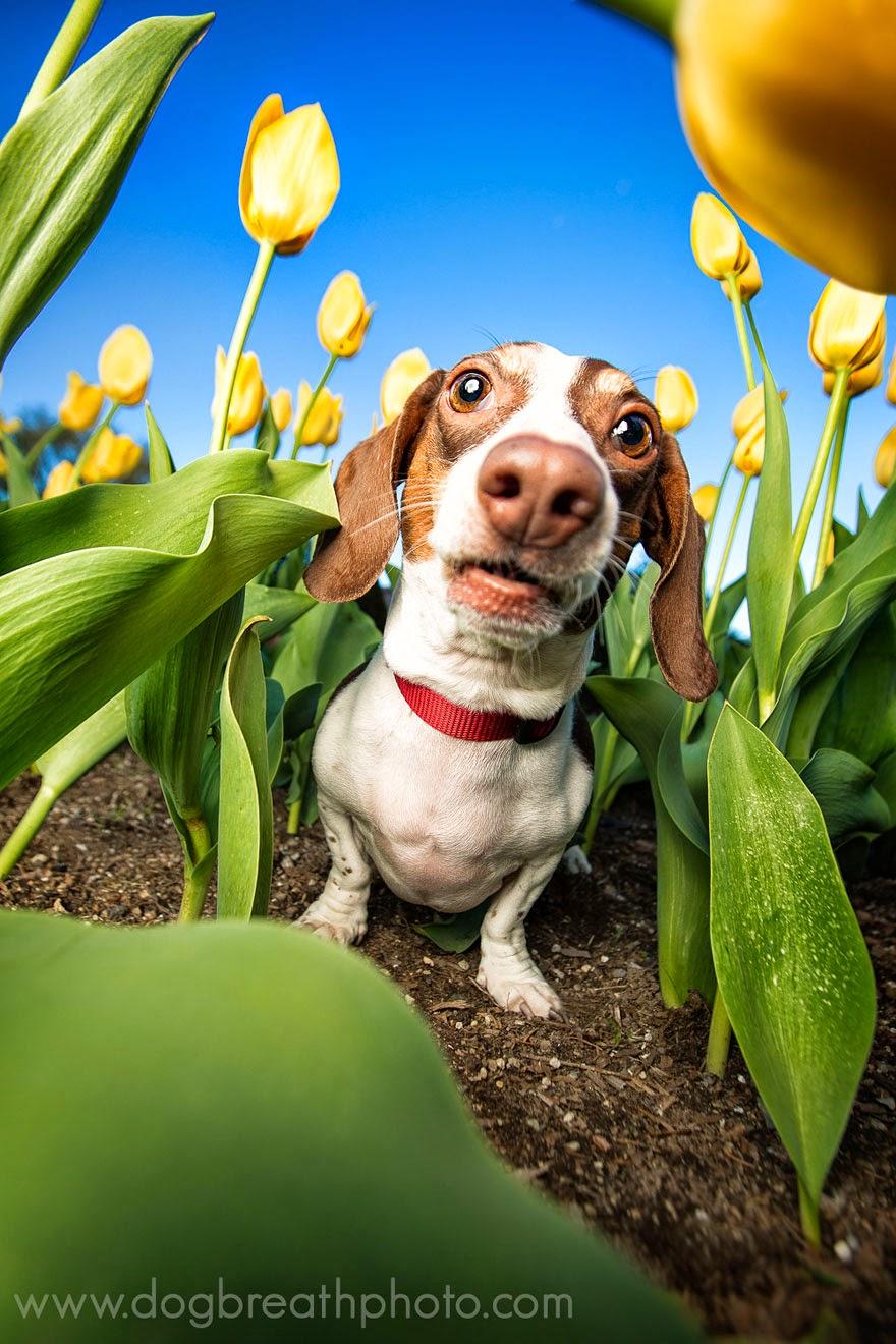 kaylee greer fotos de perros