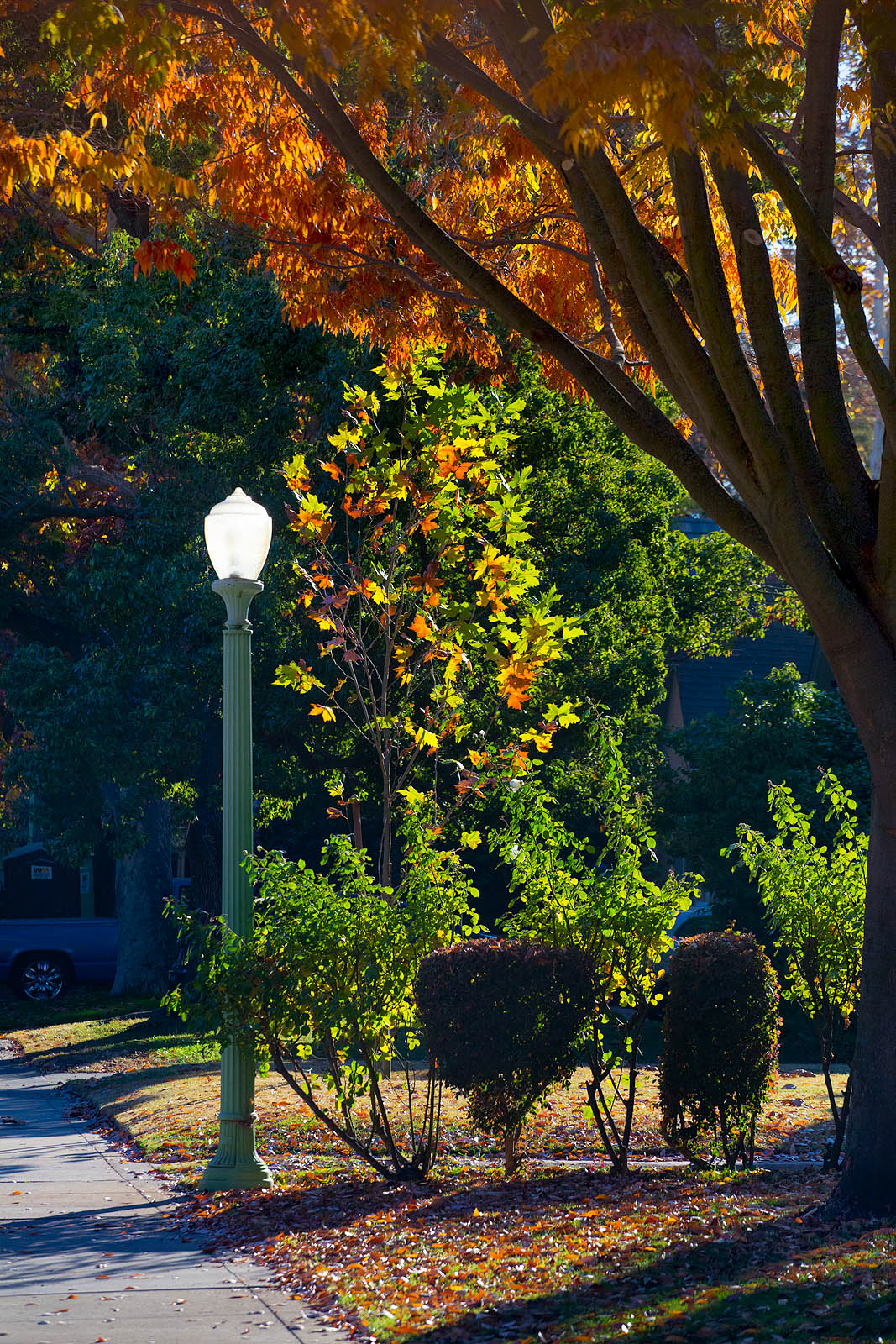 Anthony Dunn Photography: Fall Colors in Sacramento
