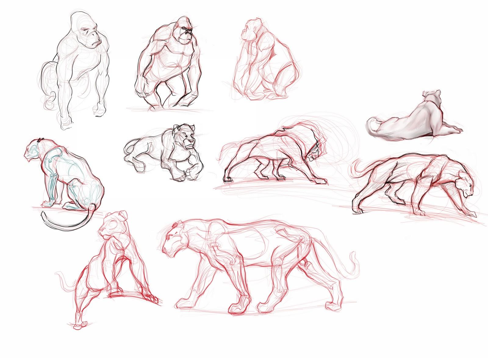 Lujo Dibujo Anatomía Animal Viñeta - Anatomía de Las Imágenesdel ...