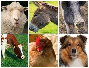 ANIMAL HUSBANDRY RELATED