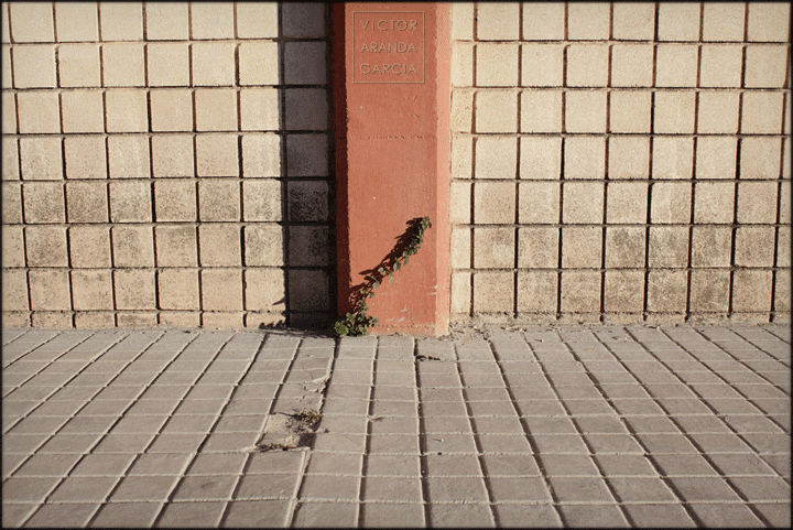 fotografia,naturaleza_urbana,Alboraia,planta,ciudad,acera