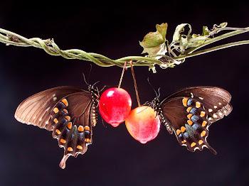 ... gambar binatang gambar kupu kupu cinta gambar kupu kupu dan love