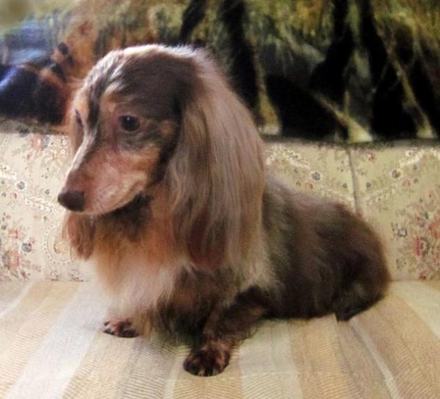Hope Rescue Dog Show Newport
