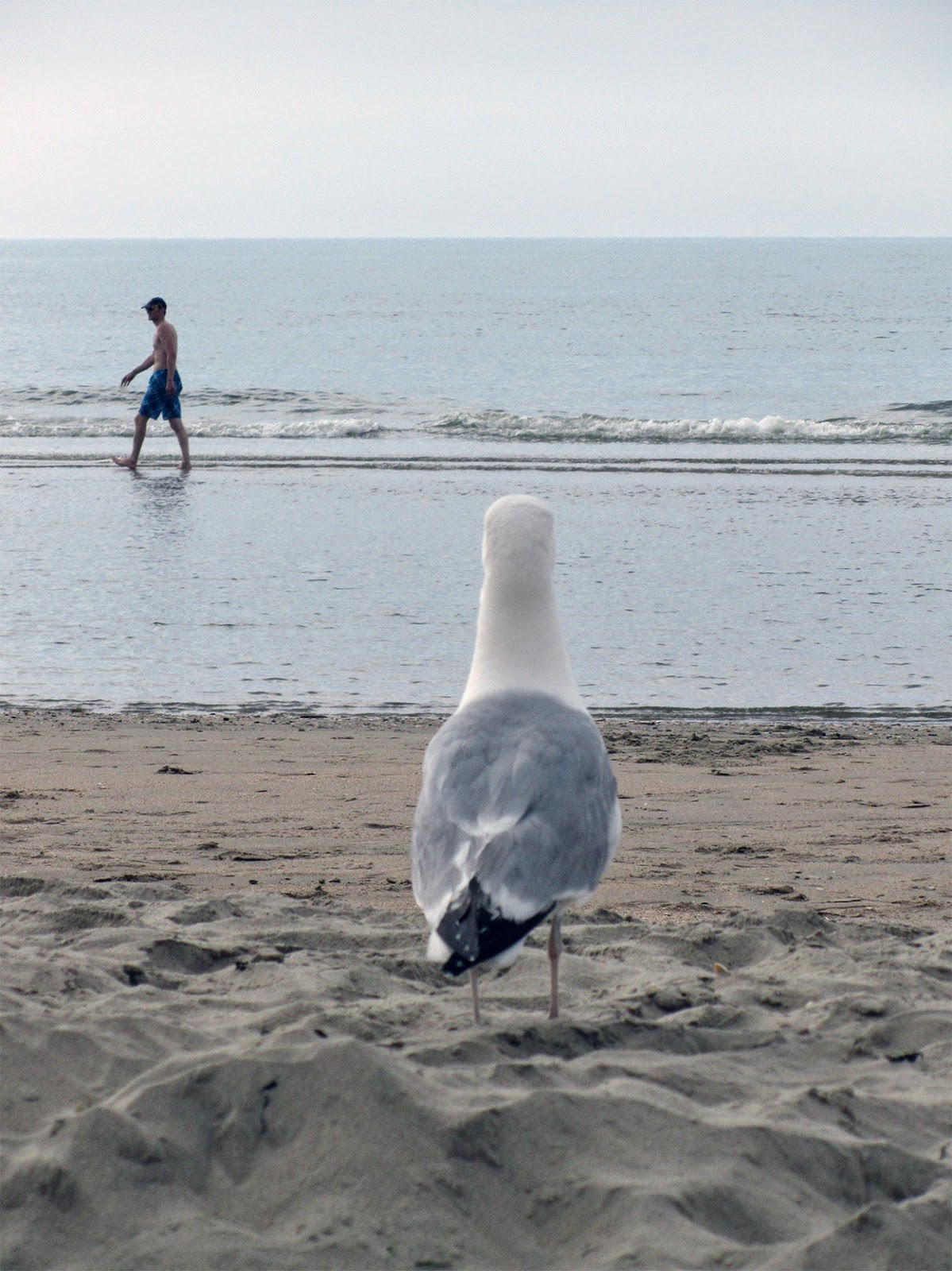seagull watching a strolling boy