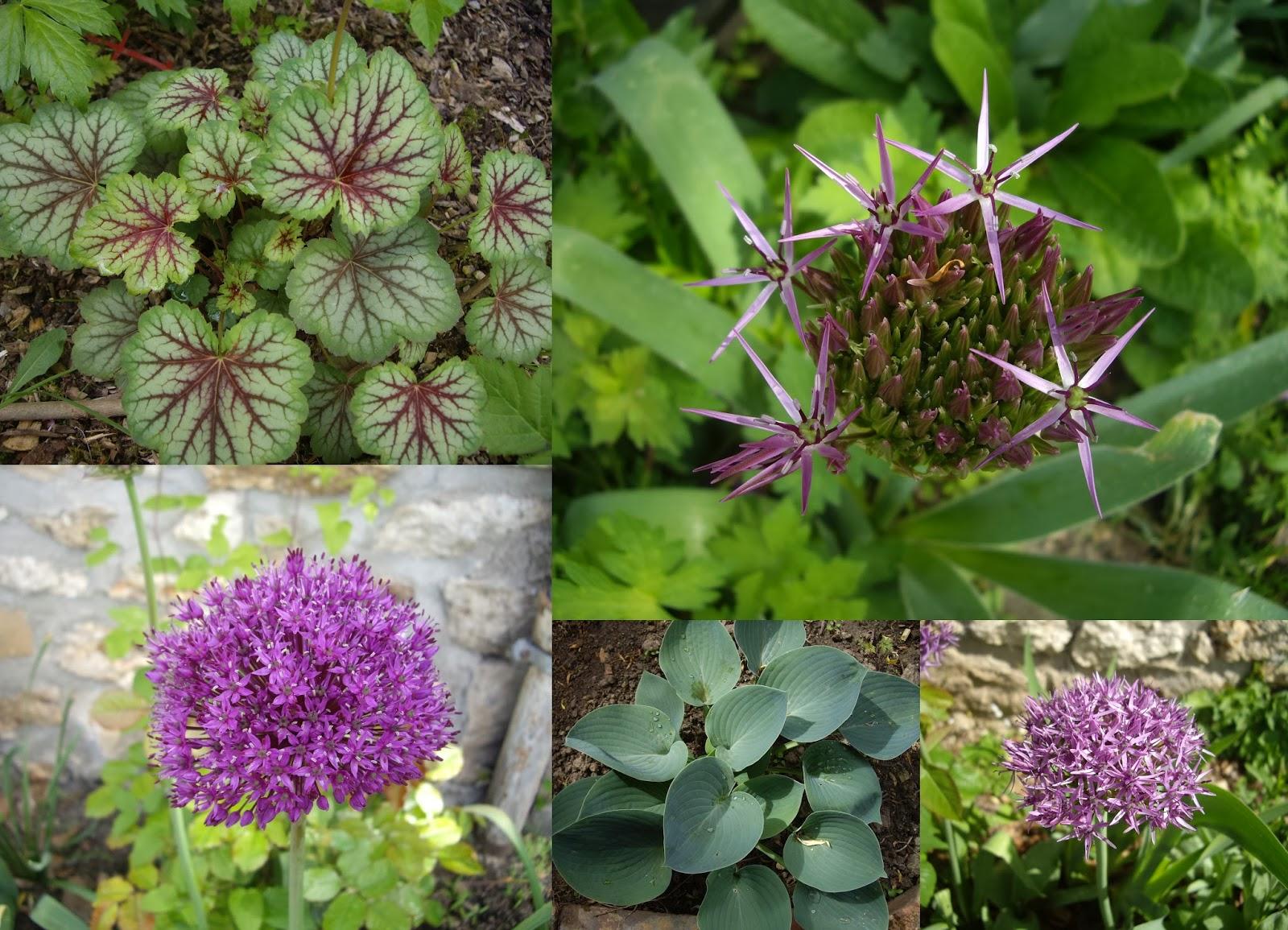 Derri re les murs de mon jardin r trospective de mai - Derriere les murs de mon jardin ...
