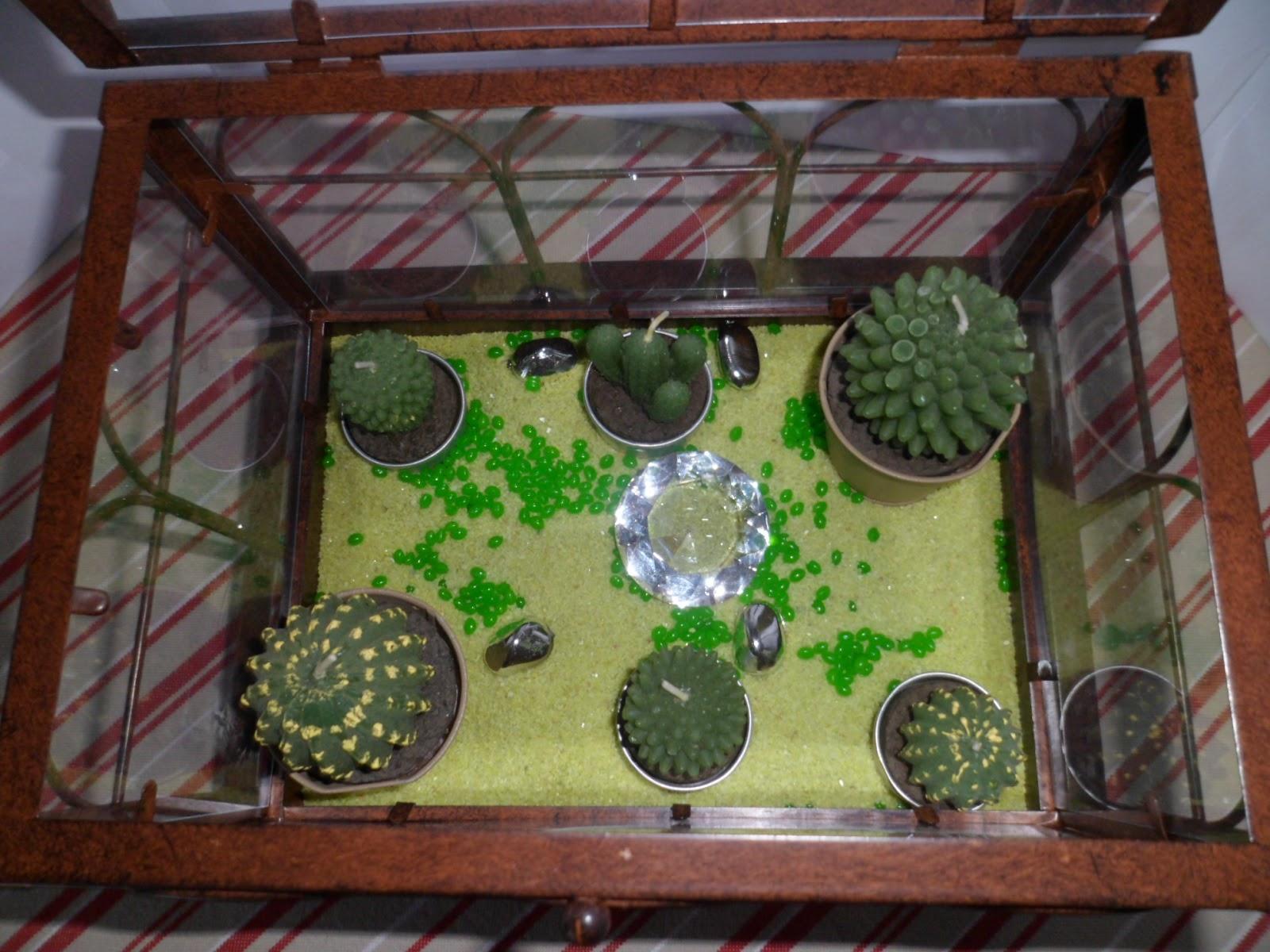 Ma vie d co serre cactus sans entretien for Petit jardin d interieur