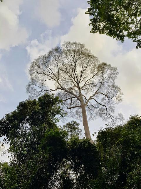 Maliau Basin, Sabah (2015)