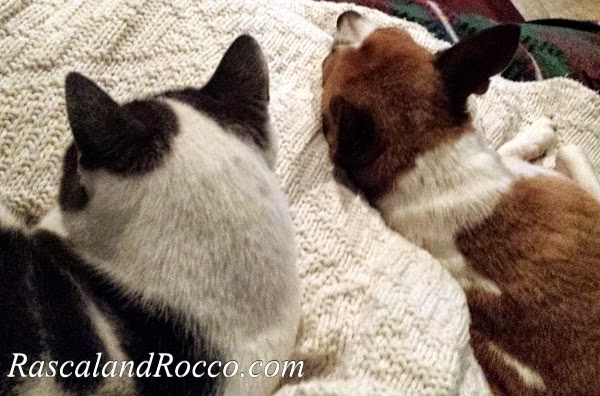 #Blog4Peace #animallover #cats #dogs #sleeping