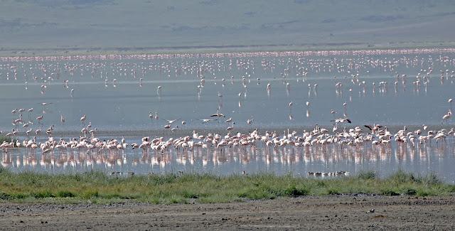 Buy wallart of Flamingos