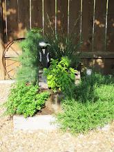The Herb Garden. . .
