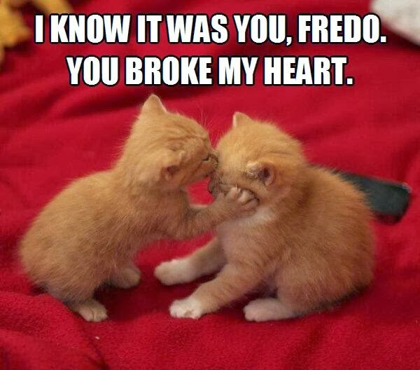 30 Funny animal captions - part 19 (30 pics), kitten meme, i know it was you you broke my heart