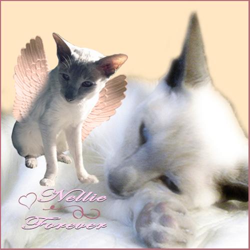 Nellie Forever