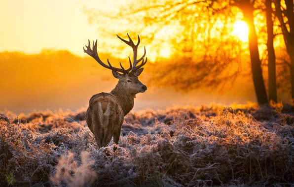 Antler and a beautiful sunny morning