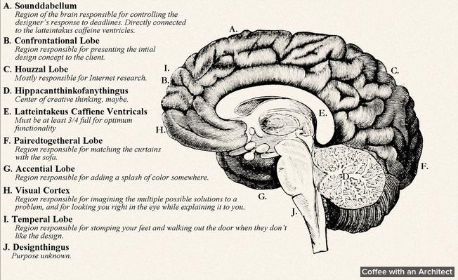left brain and right brain of designer