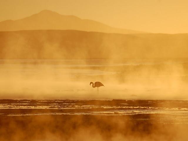 Uma linda tarde e um Flamingo, na Bolívia