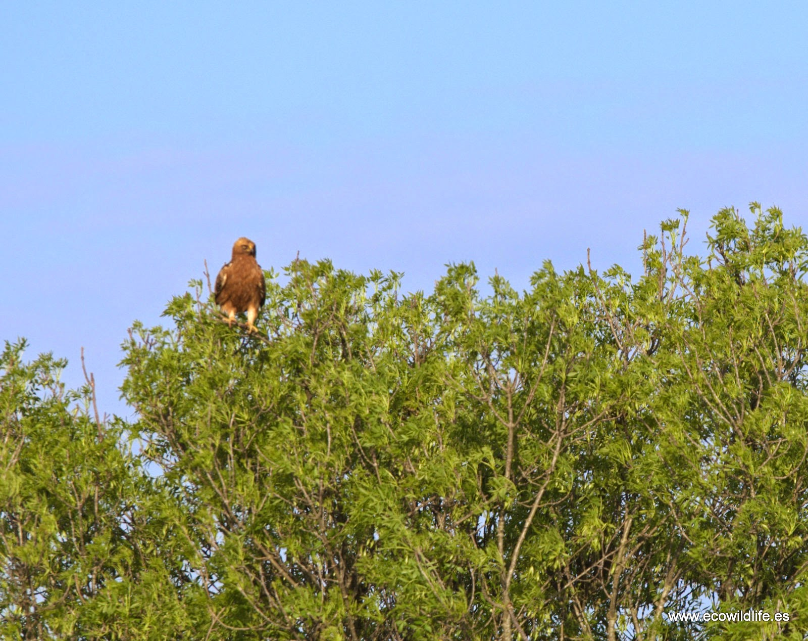 natural sitio de citas pequeño cerca de Huelva