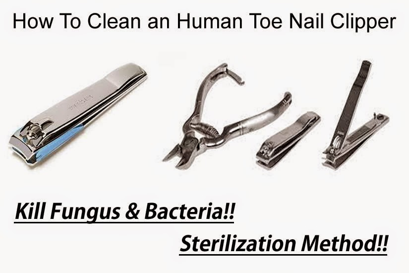How To Clean An Human Toe Nail Clipper Using Sanitize Way How To
