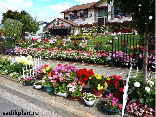 Дизайн цветов во дворе