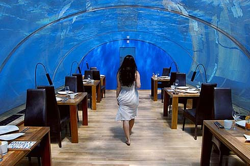 Maldives rangali islands underwater hotel rooms it 39 s a girl for Hilton hotels in maldives