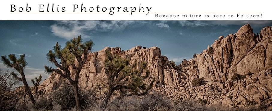 Bob Ellis Photography