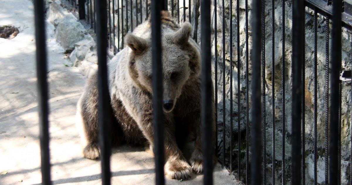 Essay keeping animals in captivity is cruel