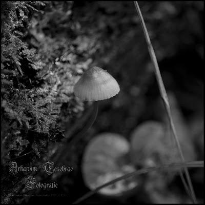 ein kleiner Pilz in einer Schwarz Weiß Aufnahme