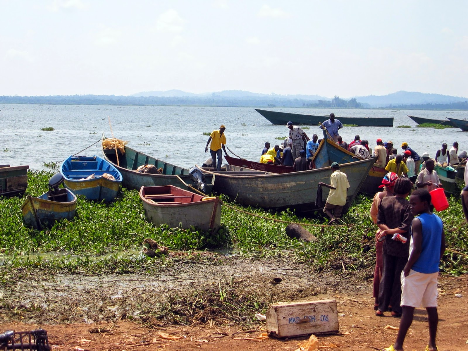 http://www.newvision.co.ug/news/666453-ministry-worried-about-reducing-fish-stocks.html