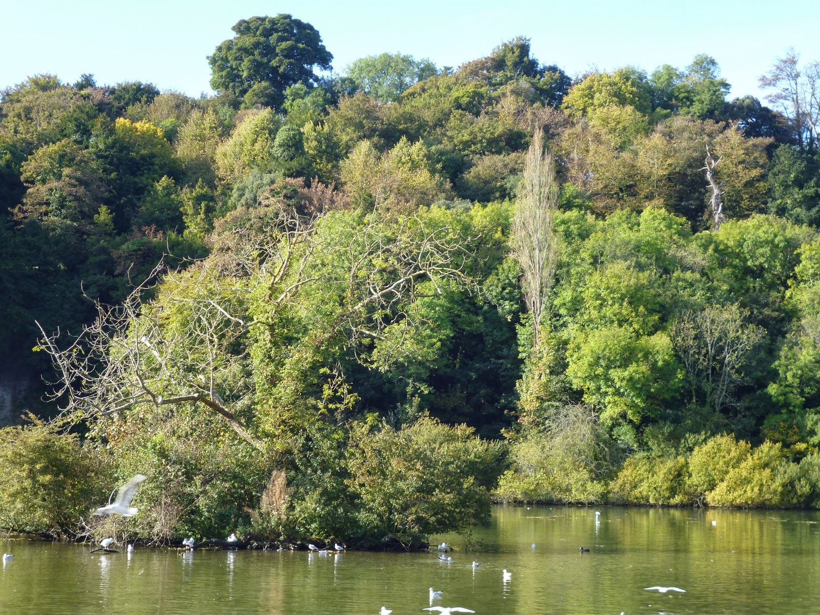 Lake and island arundel birds