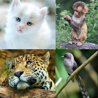 Perkembangbiakan mahluk hidup terutama hewan
