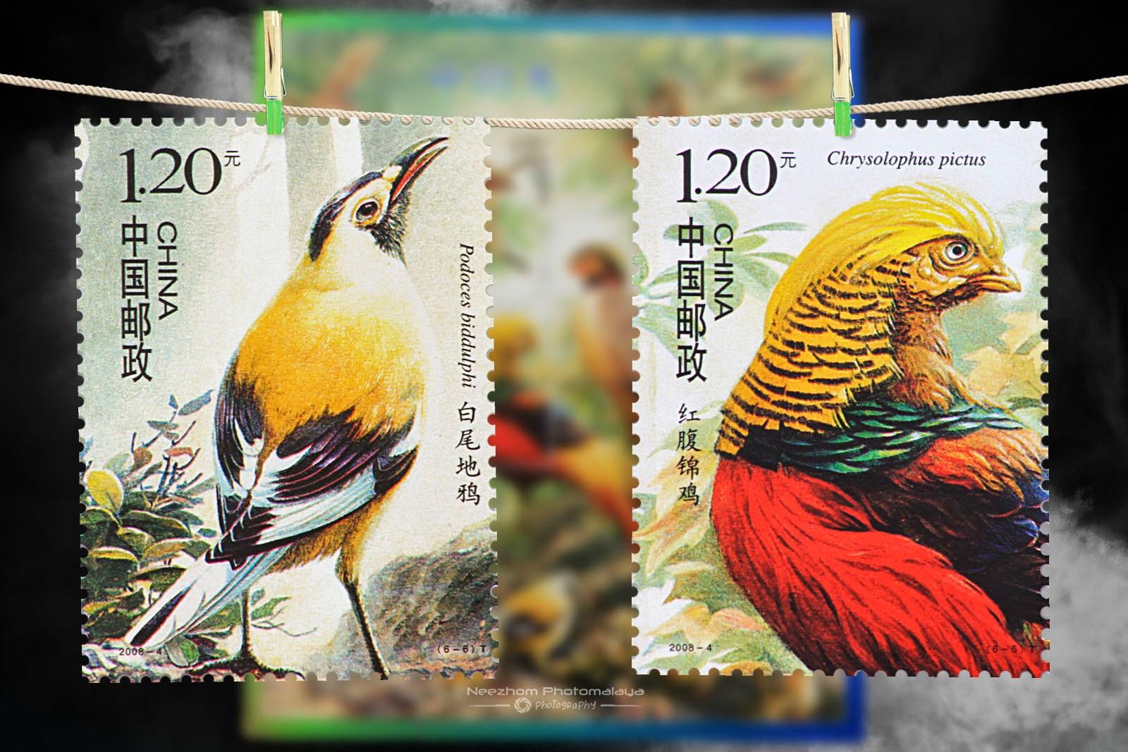 2008 Birds of China stamps - Podoces biddulphi 120 Fen, Chrysolophus pictus 120 Fen