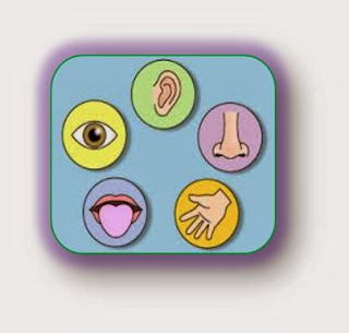 http://www.turtlediary.com/kindergarten-games/science-games/the-five-senses.html