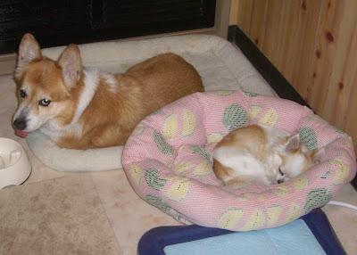 那須の別荘に一人で お供は犬2匹