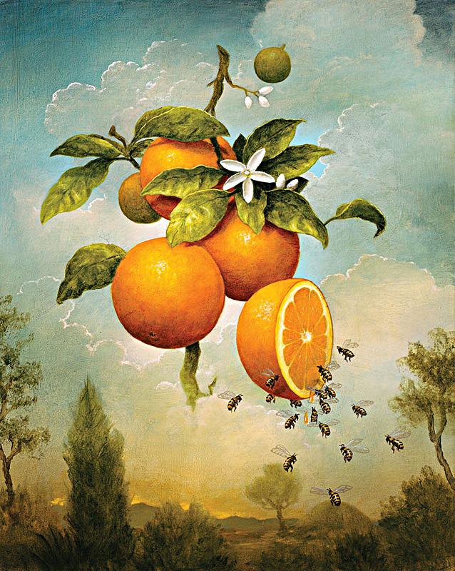 kevin sloan oranges