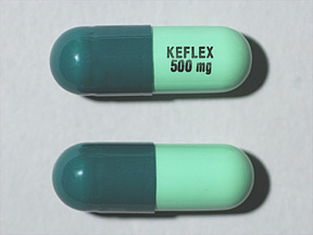 Can Dogs Take Keflex