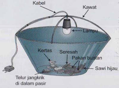 Ember tempat penetasan telur