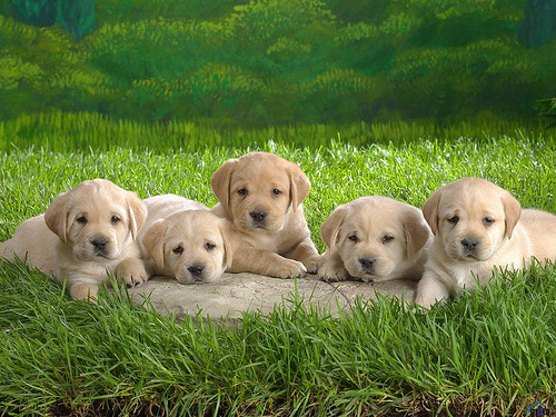Dogs And Puppies Wallpaper Cartoon Funny F...