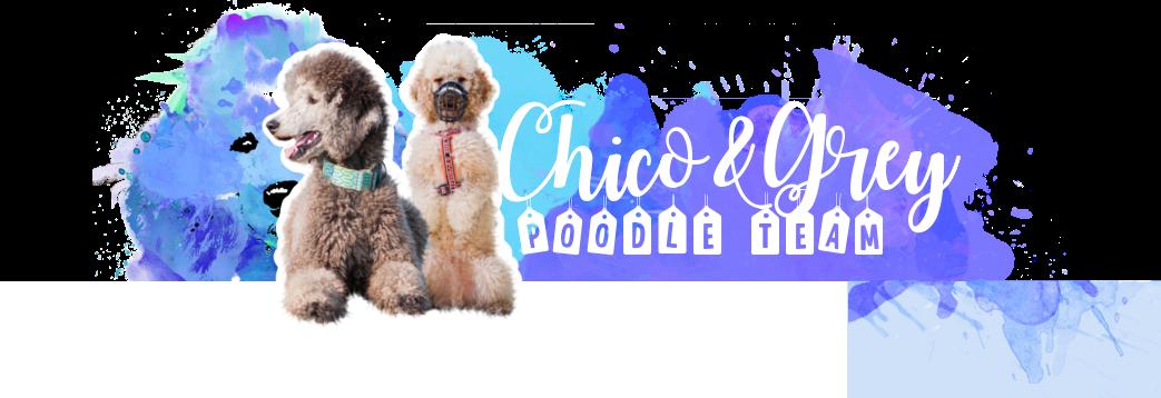 Chico&Grey- poodle team