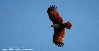 Perubahan Iklim Picu Migrasi Vertikal Burung