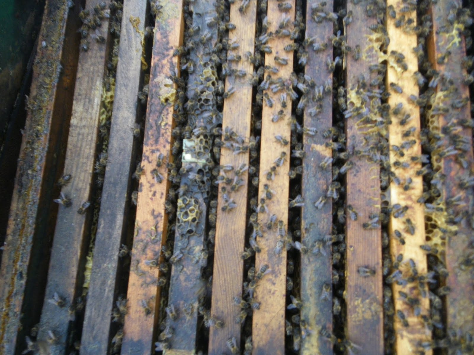 read sources langstroth topbar warre choose hive not all beehives are