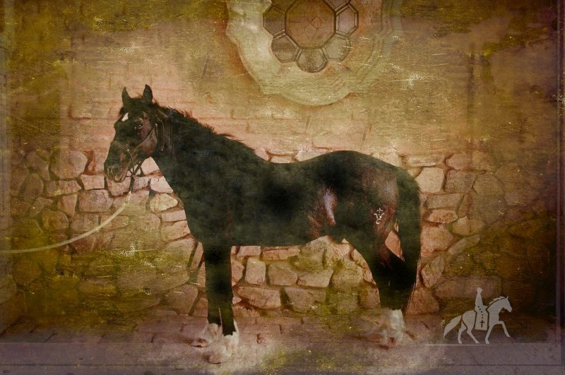 Photograph of a Spanish Barb Horse by Raechel Running