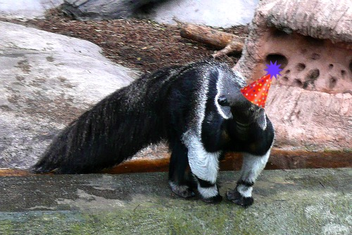 I Am NOT An Anteater October Birthday Wishes Belated