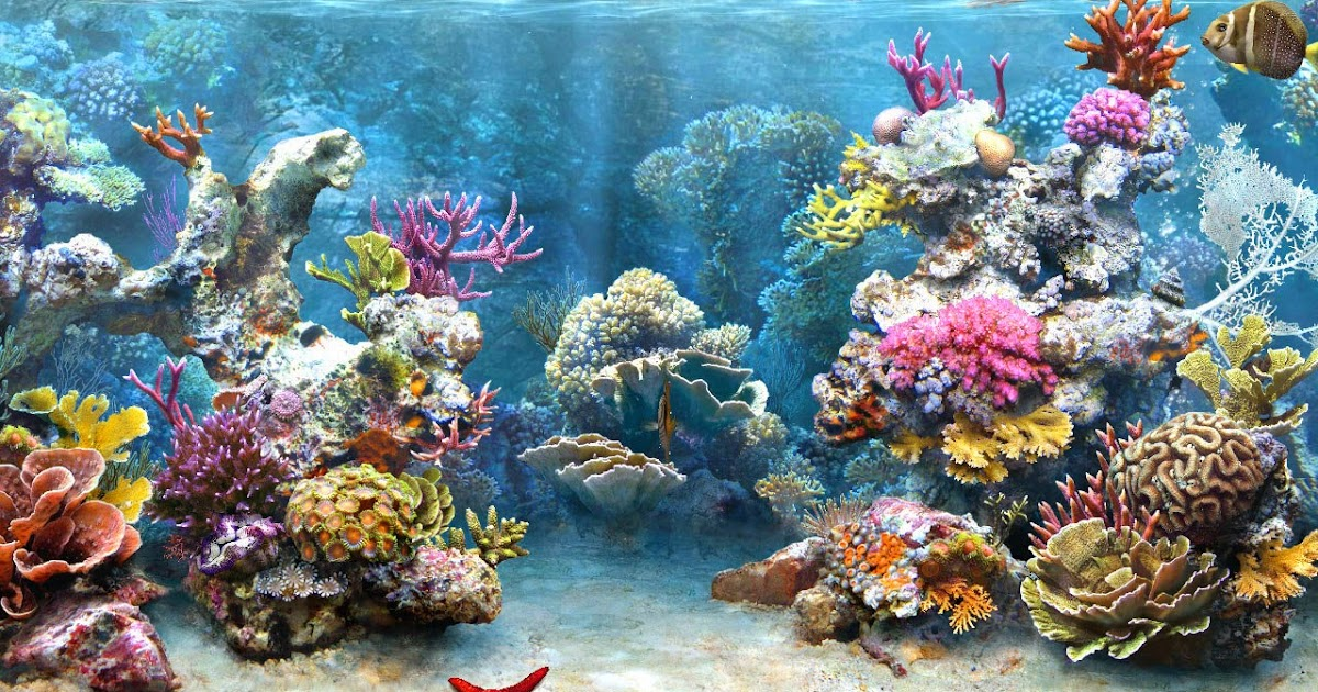 Desktop hd wallpapers free downloads coral reef hd wallpapers - Sea coral wallpaper ...